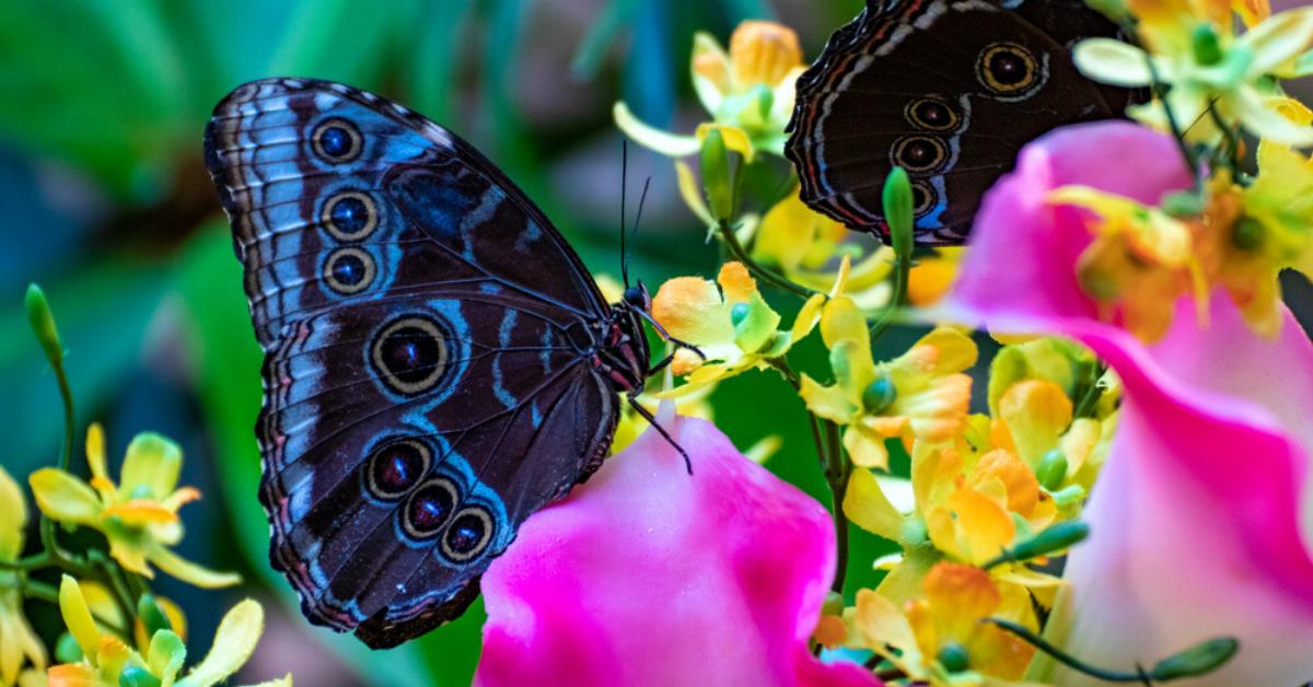 Музей живых бабочек