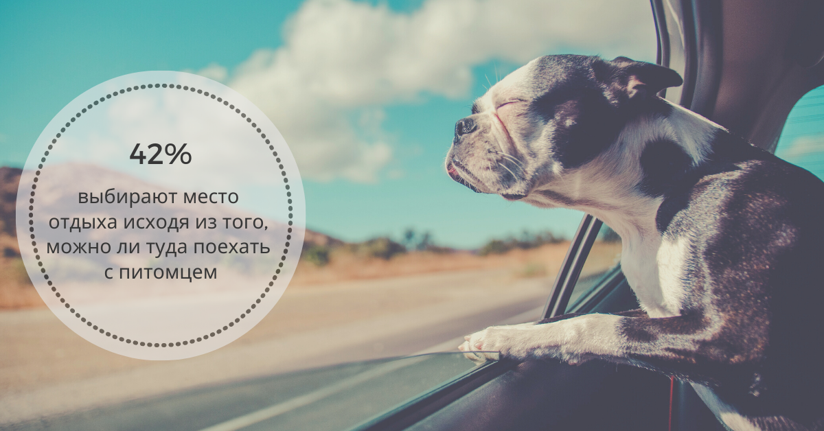 путешествия с домашними животными
